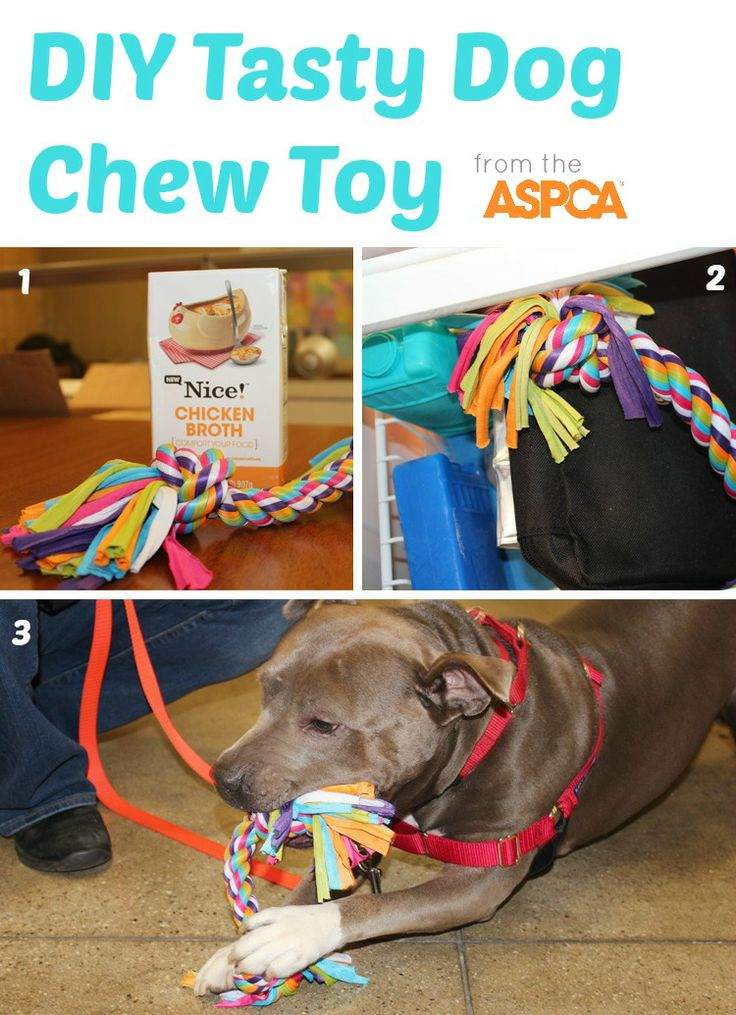 Easy DIY Tasty Chew Toy