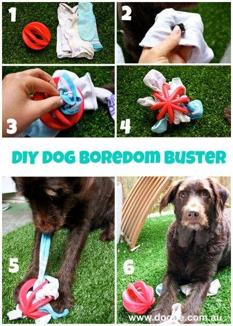 Make your own interactive dog toy