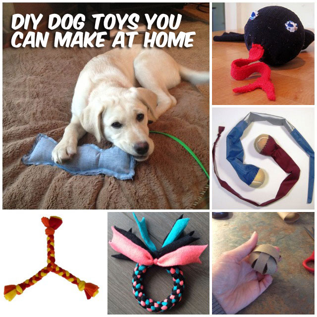 37 homemade dog toys made by diy pet owners solutioingenieria Images