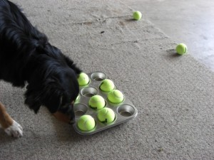 diy interactive game for dogs