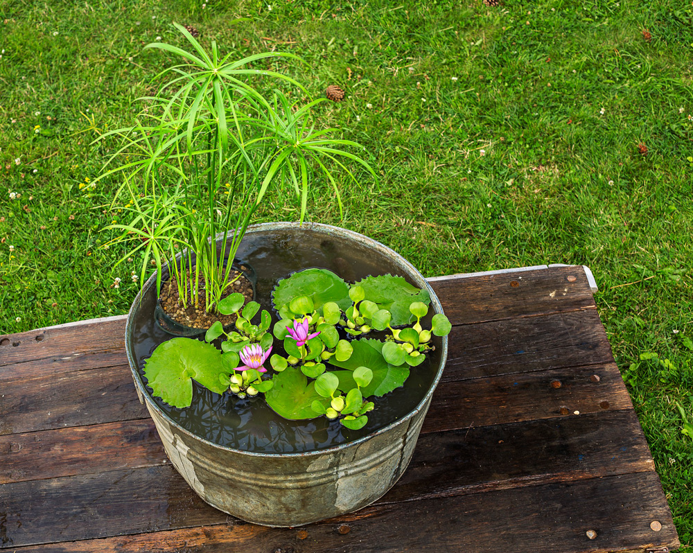 How to plant a water container garden for Container pond