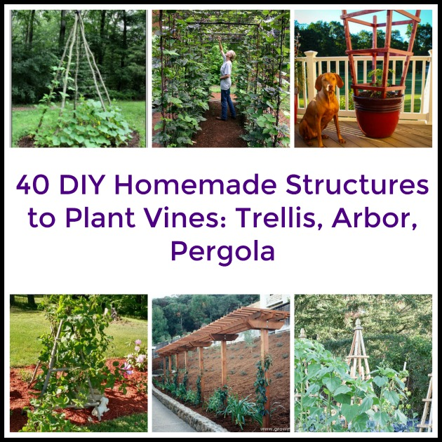 40 DIY Homemade Structures to Plant Vines: Trellis, Arbor, Pergola