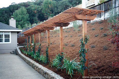 Nice About Fences Arbors And Garden Structures