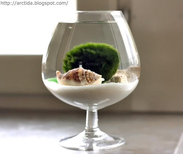 Miniature_aquarium_07