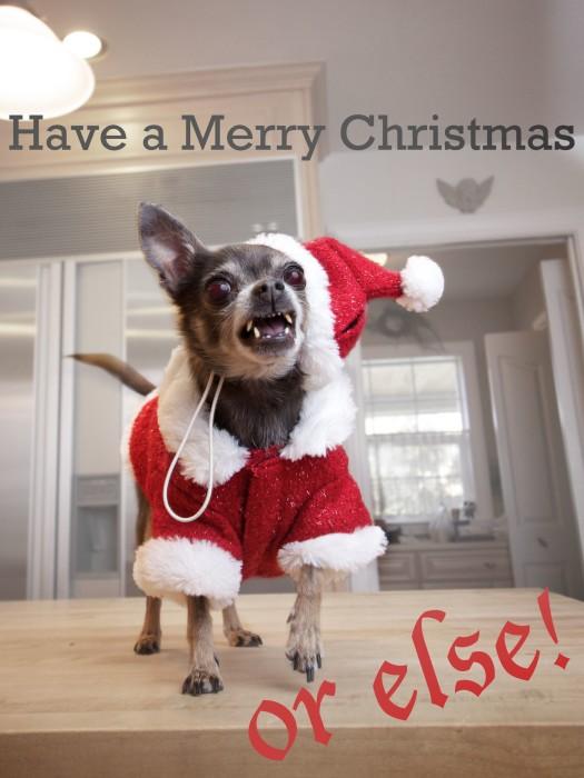 Festive Dog Merry Christmas Card