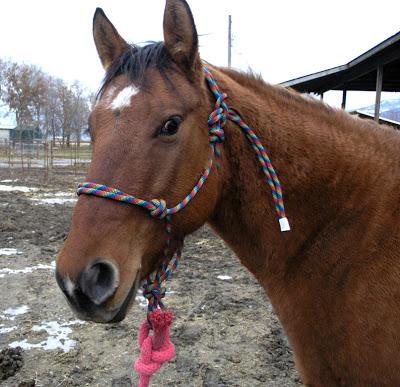 Make a Horse Halter
