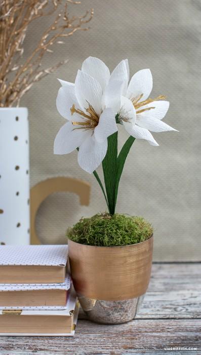 Crepe_Paper_Amaryllis_Flower