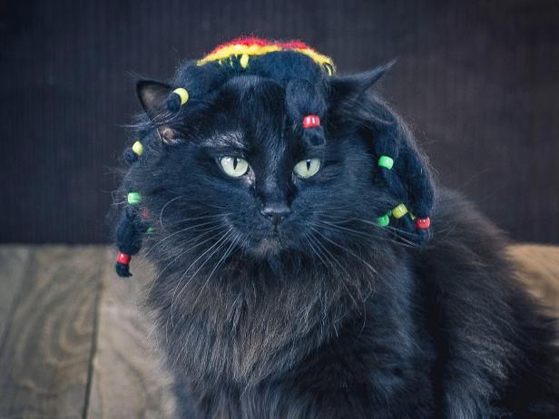 Halloween Pet Costume Groovy Rasta