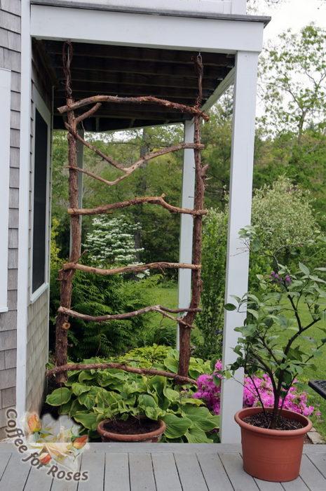 Make A Rustic Trellis For Annual Vines