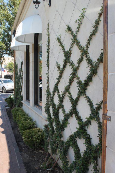 Lattice Plant Wall