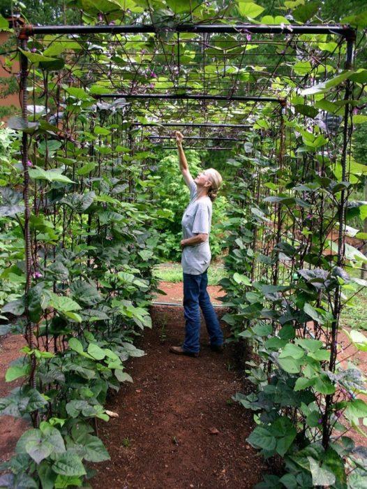Superieur Vegetable Garden Design: DIY Bean Trellis