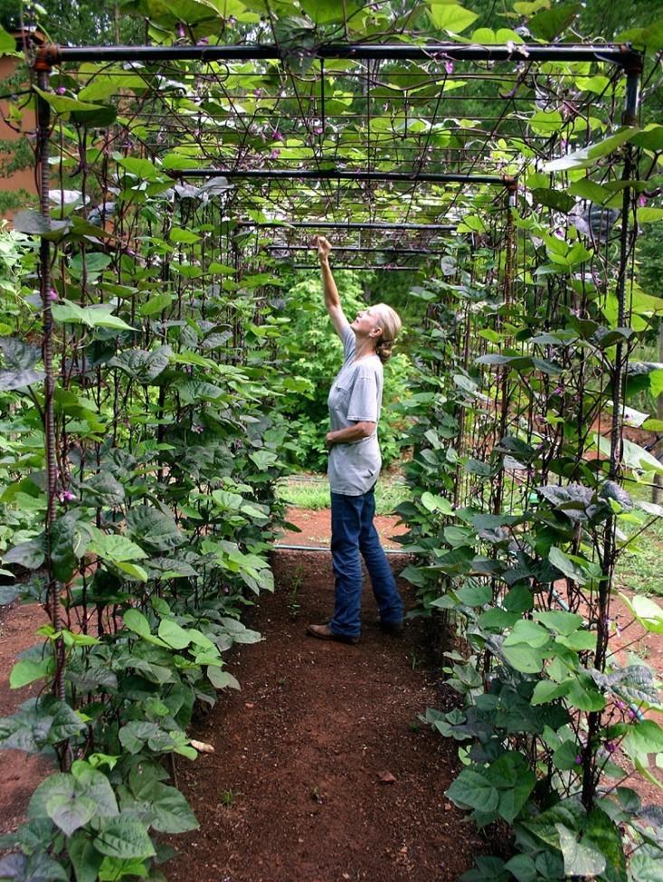 Attractive Vegetable Garden Design DIY Bean Trellis